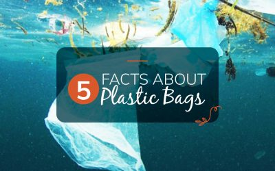 5 Facts About Plastic Bags